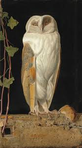 210 Best Birds Owls Images On Pinterest | Barn Owls, Drawing And Owl Watch The Secret To Why Barn Owls Dont Lose Their Hearing 162 Best Owls Images On Pinterest Barn And Children Stock Photos Images Alamy Owl 10 Fascating Facts About Species List Az 210 Birds Drawing Photographs Of Cave By Tyler Yupangco 312 Beautiful Birds