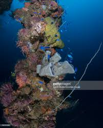Coral And Sponges On A Mast Of The Fujikawa Maru Shipwreck Truk ... Top 2 Best Truk Lagoon Liveaboard Trips The Adventure Junkies Kawanishii H8k2 Emily Flying Boat Tom Frohnhofer Diving The San Francisco Maru In Chuuk Micronesia Trucks Truk Lagoon Becky Schott Wm Sm Scuba Freediving Carlos Garcia Dive With Diverse Travel Ultimate Wreck Divers Haven Wrecks From Odyssey 1422nd April 2018 Nippo Of Imperial Japanese Navy Coral And Sponges On A Mast Of Fujikawa Shipwreck Thankful For Rescue Coast Guard Compass