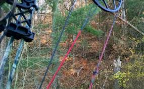 How To Hunt a Deer Bedding Area
