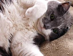 signs of worms in cats feline coccidiosis a cause of stool and diarrhea in cats