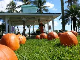 Pumpkin Patch Naples Fl 2015 by Silverlakes Homeowners Association