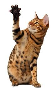 100 Interesting Facts about Cats