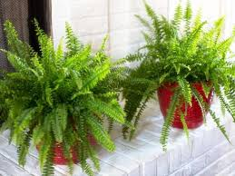 Best Plant For Bathroom by 5 Best Plants That Thrive In Your Bathroom Plant Talk
