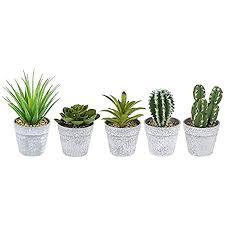 ideen mit herz deko sukkulenten set 5 stück künstliche kakteen pflanzen im echt look ideale deko für büro fensterbank wohnzimmer