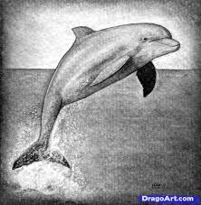 How To Draw A Realistic Dolphin