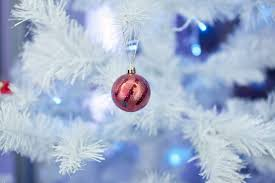 Christmas Tree Has Aphids by 10 Secrets Of Christmas Tree Farmers Mental Floss