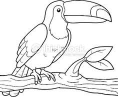 tucan outline Toucan
