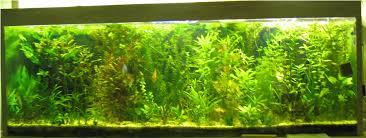 aquarium d eau douce installer premier aquarium d eau douce