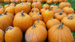 Bobs Pumpkin Patch Snohomish by Stacy And Brian U0027s Adventures In Life October 2014