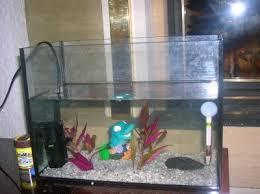 aquarium d élevage pour alevins de poissonsdesayat
