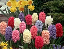 plant a bulb garden
