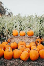 Goebberts Pumpkin Farm Haunted House by The 25 Best Pumpkin Farm Ideas On Pinterest A Maze In Corn