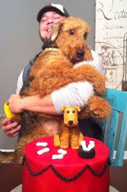 Airedale Terrier Non Shedding by 40 Best Airedale Terriers Images On Pinterest Airedale Terrier