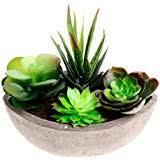 Decorative Faux Succulent Artificial Cactus Fake Cacti Plants With Boat Shape Gray Pots