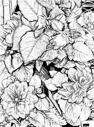 Nice Printable Flower Coloring Pages For Adults 43