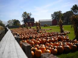 Pumpkin Patch Columbus Wi by Home