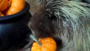 Porcupine Eats Pumpkin by How To Make A Wine Bottle Dinner Bell U2013 Cottage Life