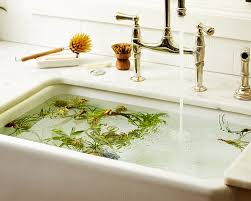 Pot Plants For The Bathroom by Gardening 101 How To Water An Air Plant Gardenista