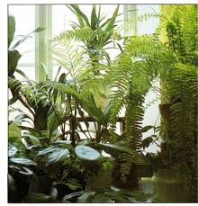 Jenss Decor And Catering by 18 Best Plants For Bathroom No Window Led Shower Lighting