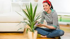 yucca palme pflege tipps für ihr zuhause gartencenter mencke