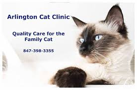 arlington cat clinic arlington cat clinic home