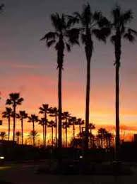 Palm Trees Tumblr Vertical Wallpaper Background Images California Tree At Dusk