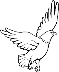 Bald Eagle Coloring Page For 3 Cheers Animals