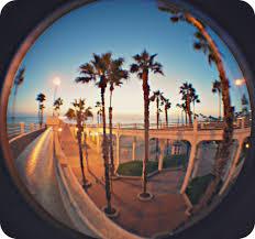Oceanside Sunset In Palm Trees Joshua Daniel O Tags Life California
