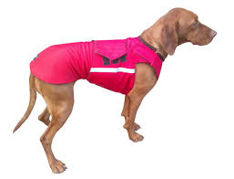 When Do Vizslas Shed Their Puppy Coat by Vizsla Winter Dog Coat Custom Made Dog Raincoat By Pepperpetwear