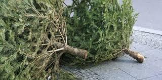 Ont Ideas Christmas Tree Disposal Bags Dublin