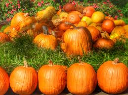 Pumpkin Patches Around Fort Worth Tx by Awesome Fall Things To Do In Dallas Fort Worth