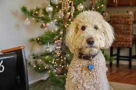 Colorado Springs Christmas Tree Permit 2014 by Camp Bores 2014
