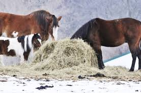 Feeding Hay On Ground Vs. Feeder - The #1 Resource For Horse Farms ... Defeat The Enemy Fly Control Options For Horse And Barn Music Calms Horses Emotional State The 1 Resource Breyer Crazy In At Schneider Saddlery Horsedvm Controlling Populations Around Oftforgotten Bot Equine Dry Lot Shelter Size Recommendations Successful Boarding Your Expert Advice On Horse 407 Best Barns Images Pinterest Dream Barn Barns A Management Necessity Owners Beat Barnsour Blues Care Predator Wasps Farm Boost Flycontrol Strategies Howto English Riders