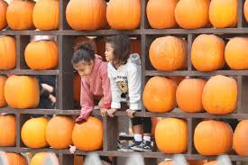 North Lawrence Pumpkin Patch by Pumpkin Patch Preciousness Kourtney Kardashian Has Some Fall