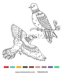 Coloring Book Birds Illustrations