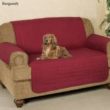 Microfiber Pet Furniture Covers With Tuck In Flaps Faux Suede Pet Fniture Covers For Sofas Loveseats And Chairs Comfort Research Big Joe Bagimals Dawson The Dog Bean Bag Armchair Shih Tzu Lap On The Stock Photo Image 350298 Dog Cat Chamomile Amazoncom Sure Fit Quilted Throw Sofa Slipcover Taupe King Sitting His Throne 1018169 Shutterstock Antique Asian Chair Chinese Export Wood Carved Dragon Lion Foo Me My Dogcat Fold Out Bed With Protector Available In Dogs Amazoncouk Boxer Destroyed A Leather Armchair Alone At Home Damaged Hound Buttonback Occasional Loaf
