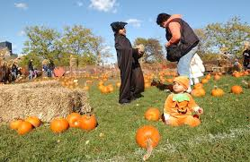Bengtsons Pumpkin Patch Homer Glen Il by Best Pumpkin Patches And Farms Near Chicago