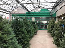 Aspirin Keep Christmas Trees Alive by Time To Get A Christmas Tree Marijuanaenthusiasts