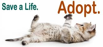 adopt a cat adopt a pet los angeles county