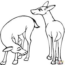 Dibujo De Caricatura De Dos Ciervos Para Colorear Dibujos