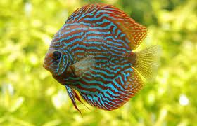 aquarium tropical de la porte dorée office de tourisme