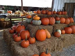 Pumpkin Patch Farms Raleigh Nc by The Family Farm On Avent Ferry