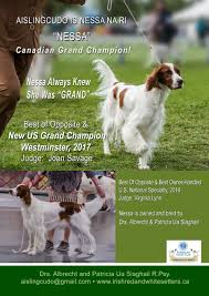 Red White Irish Setter Shedding by Aislingcudo Ckc Perm Reg U0027d Irish Red And White Setters Kennel