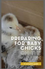 343 Best Chickens (& Other Farm Eggs) Images On Pinterest ... Cheap Raising Ducks For Eggs Find Deals On The Chicken Chick 11 Tips For Predatorproofing Chickens 1064 Best Images Pinterest Chickens In The South Southern Living Keeping Ultimate Beginners Guide Australian Inrested Your Backyard Home Life How To Chickenproof Garden Modern Farmer Coop Yard Design 7 Coops 6760 Homestead Critters Landscape Gardening With 343 Other Farm Eggs