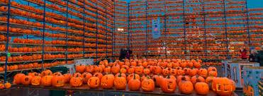 Roger Williams Pumpkin Festival 2017 by Highwood Pumpkin Festival North Of Chicago Il 25 000 Jack O