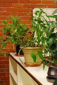 Best Plants For Bathroom No Light by Best Office Plants Artificial Bouquet Of Green Plants Indoor
