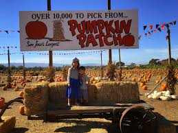 San Jose Pumpkin Patch 2015 by All Things Bright And Beautiful Painted Pumpkins Easy
