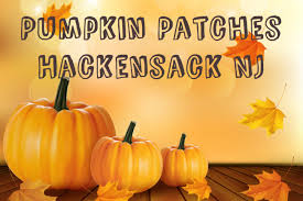 Best Pumpkin Picking Bergen County Nj by Patches Hackensack Nj