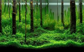 Aquarium Backgrounds Pictures - Wallpaper Cave The Green Machine Aquascaping Shop Aquarium Plants Supplies Photo Collection Aquascape 219 Wallpaper F Amp 252r Of The Month October 2009 Little Hill Wallpapers Aquarium Beautify Your Home With Unique Designs Design Layout New Suitable Plants Aquariums Pinterest Pics Truly Inspired Kinds Ornamental Aquascaping Martino Agostini Timelapse Larbre En Mousse Hd Youtube Beauty Of Inside Water Garden Inspirationseekcom Grass Flowers Beautiful Background