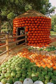 Uesugi Farms Pumpkin Patch by 190 Best Pumpkin Festivals Images On Pinterest Fall Decorations